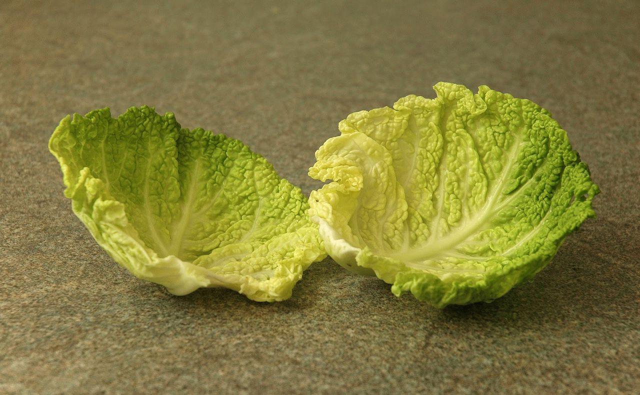 Как правильно прикладывать капустный лист после уколов: обострение, показатели, признаки заболевания, причины