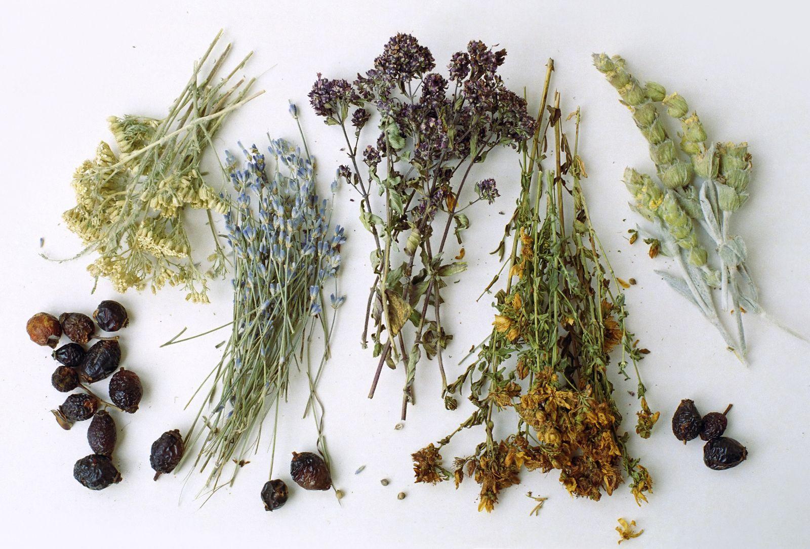 лекарственные травы при заболеваниях груди