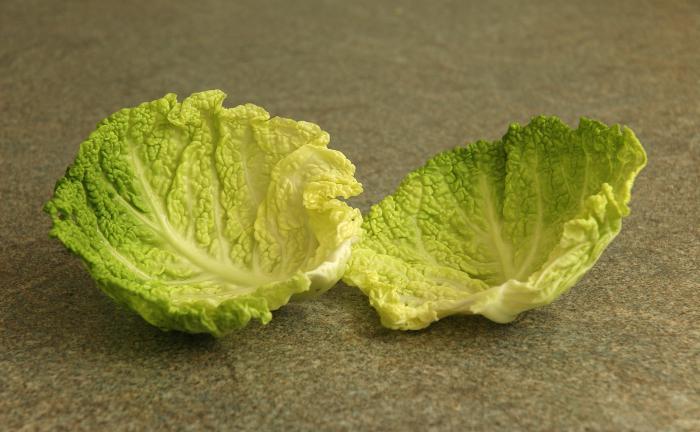 два листа капусты при мастопатии