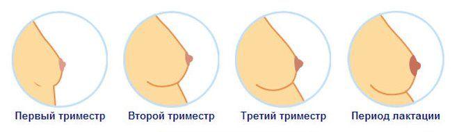 Соски увеличиваются при беременности