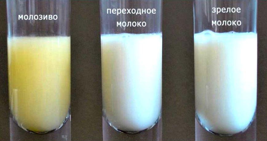Что же такое молозиво? Переходное молоко
